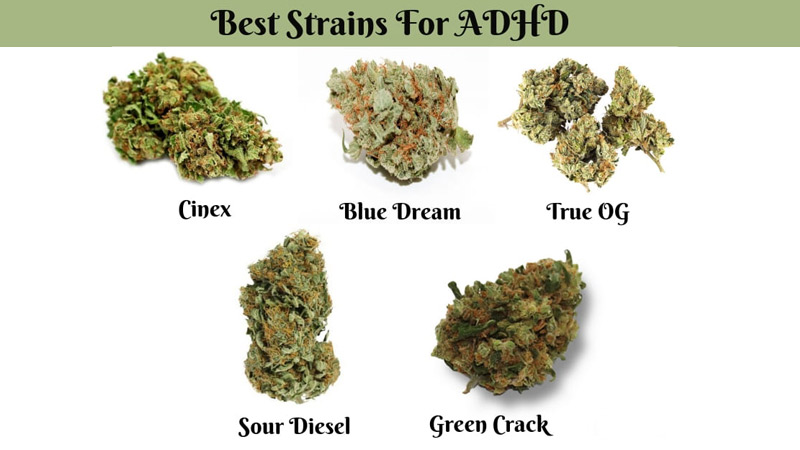 strains-for-ADHD